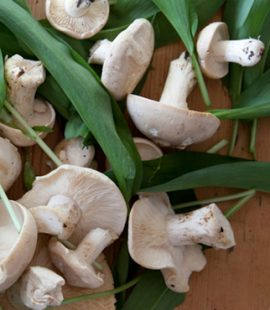 St Georges Mushrooms with wild garlic